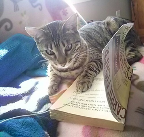 Who doesn't love a kitty reading a book!