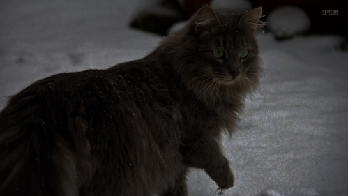 cat-walking-in-the-snow-27405-1366x768