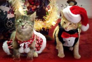 Christmas-Cat-cat-elves